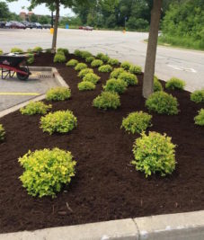 Commercial Mulch Landscaping