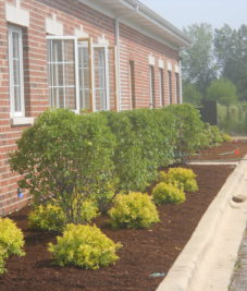 Commercial Landscaping Bushes
